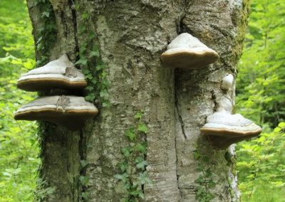 bosques_de_bajauri_y_obecuri